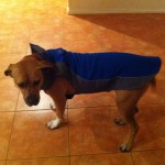 Marley with her new raincoat on
